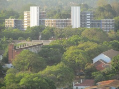 The multitude of trees in Harare